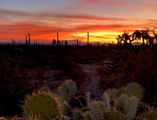 23-24 november: Tucson