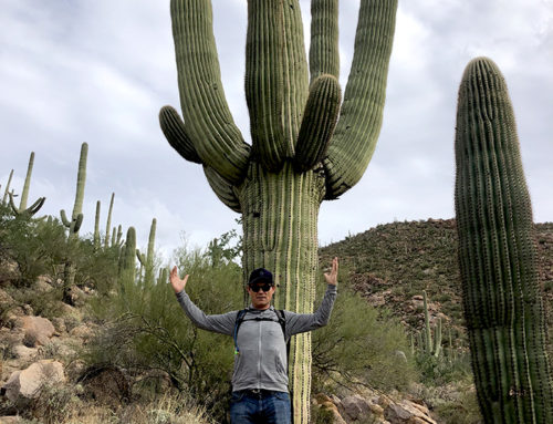 28 november: Saguaro National Park